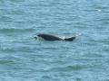 700_dolphin_adventure (16)