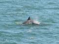700_dolphin_adventure (18)