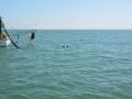 700_dolphin_adventure (19)