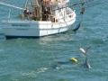 700_dolphin_adventure (14)