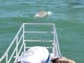700_dolphin_adventure (23)