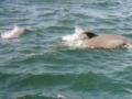 dolphin9e